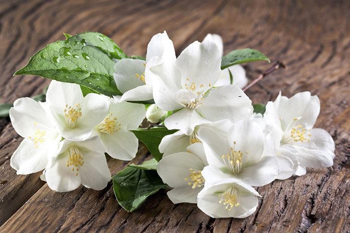 5 najpiękniej pachnących roślin do ogrodu