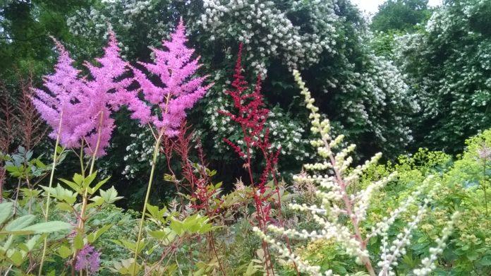 Kwiaty wieloletnie w ogrodzie