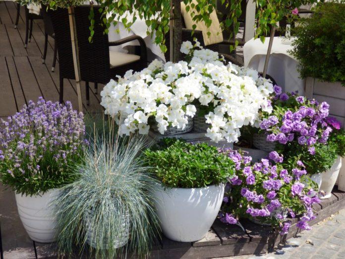Doniczki do kwiatów