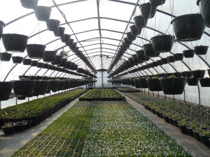 Szkółki ogrodnicze