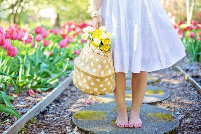 kwiaty ogrodowe wieloletnie niskie