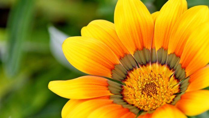 Kwiaty wieloletnie do ogrodu