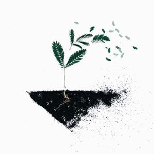 Ziemia ogrodnicza – jaką wybrać?