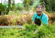 Jak skutecznie pozbyć się zalegających gałęzi w naszym ogrodzie