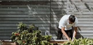 Jak wybrać kompostownik do ogrodu