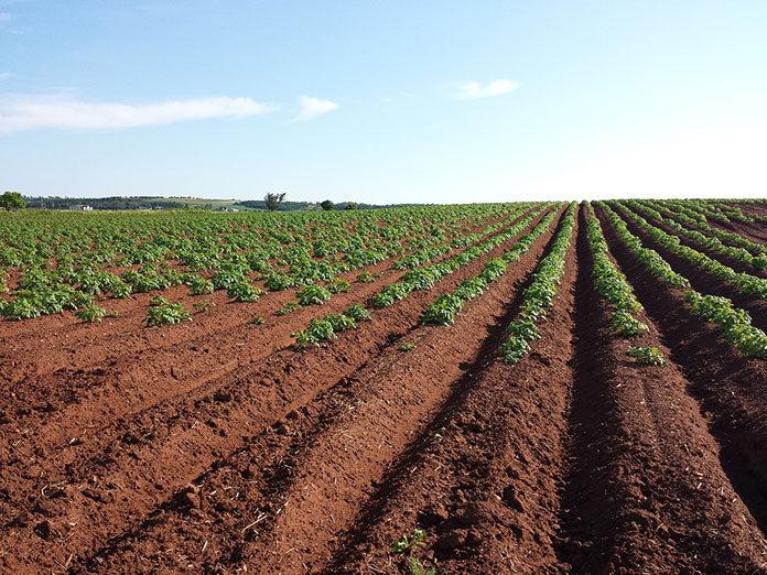 Jak przyspieszyć wzrost upraw