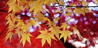 Jesień na tarasie i w ogrodzie